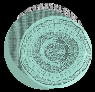 cropped-Logo-sem-escrito-fundo-transp-1.png